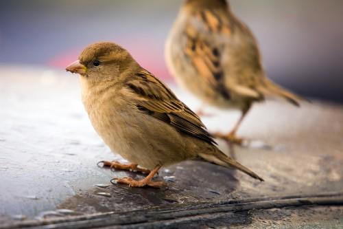Vogelkot – Ihr Auto richtig schützen und reinigen