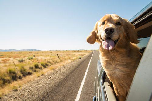 Reisen mit dem Auto: Darauf sollten Sie vor Fahrtbeginn achten